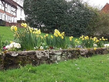 -daffodils_and_white_flowers